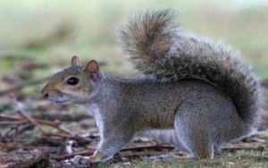 scoiattoli a Eracòeamare